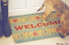 Welcome ... (MeadowGirl) Tags: she house home up for is photo shoot with who border meadow her terrier welcome today fidget such bless wolfy wasnt