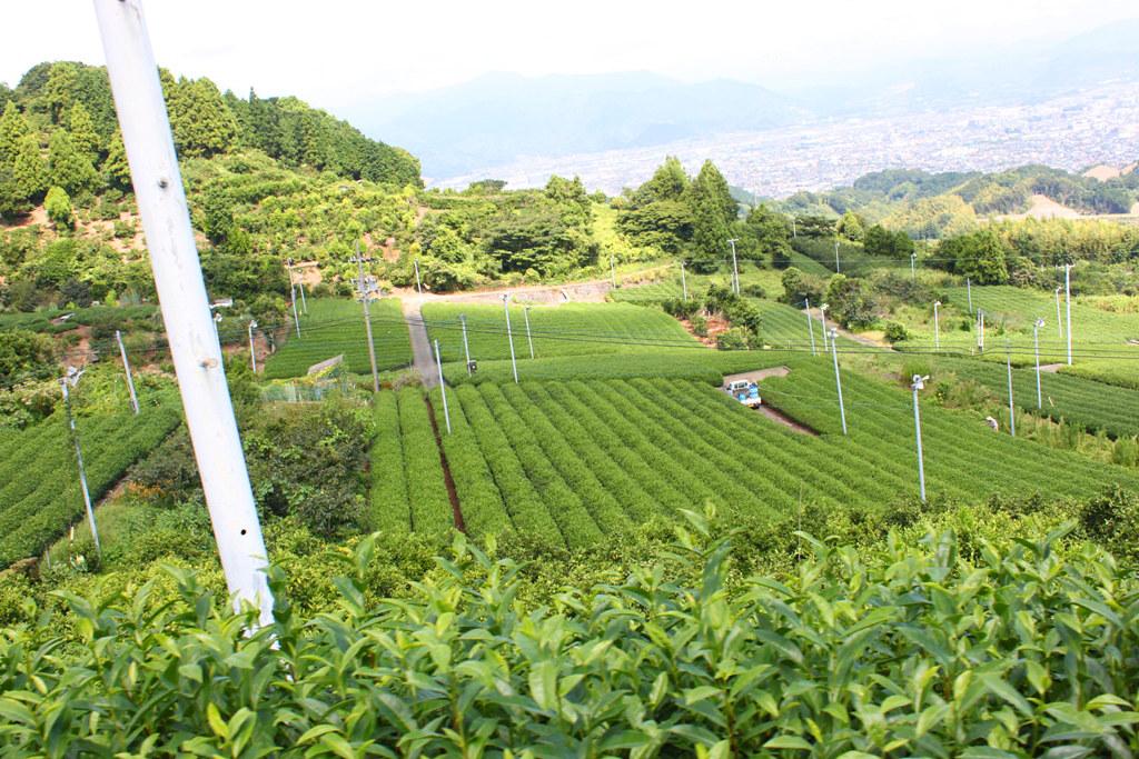 Shizuoka Guide (13)