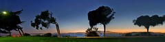 distinctive sisters - panorama (pbo31) Tags: california park november blue trees sunset sky panorama orange color nature northerncalifornia sisters bay big nikon view wide large panoramic bayarea sanfranciscobay eastbay bluehour d200 alameda alamedacounty publicaccess 2010 bayfarmisland harborbayparkway