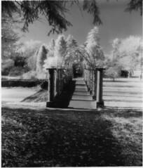 Dyffryn in Autumn (wildjones) Tags: mamiya tlr gardens ir filter eco developed printed aura mcc dyffryn srb efke id11 adox moersch 4812 ir820 griturn