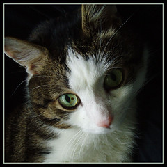 Little Prince Charming (GiNa P.) Tags: cute cat prince katze charming freddy kater brav unschuldig