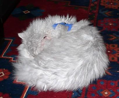 Gröggu having a sleep