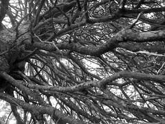 Branches Bare (notoneproject) Tags: white black tree branches twigs montebaldo 123bw