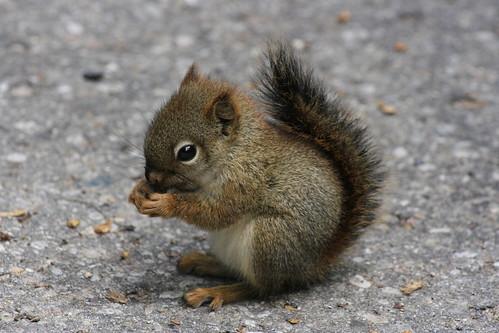 SquirrelMalfoy aka Gabby