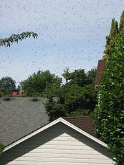 Beekeeping 2349