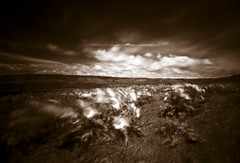 Rowena Crest, 90 seconds (Zeb Andrews) Tags: film sepia oregon dramatic pinhole infrared pacificnorthwest wildflowers columbiarivergorge zeroimage zero69 rowenacrest bluemooncamera zebandrews pinscapes efkeir820 zebandrewsphotography
