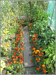 inside the greenhouse copy