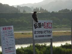 信濃川の看板と烏