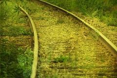 Le voyage vers l'Est (Les jours heureux enr.) Tags: green rails thumbsup freshminds mywinner aplusphoto top20green photodevoyage thetriptowardseast photoquebec bellecomposition