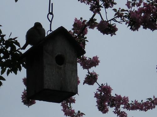 Birdie on Her House