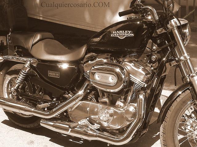 Harley brillante