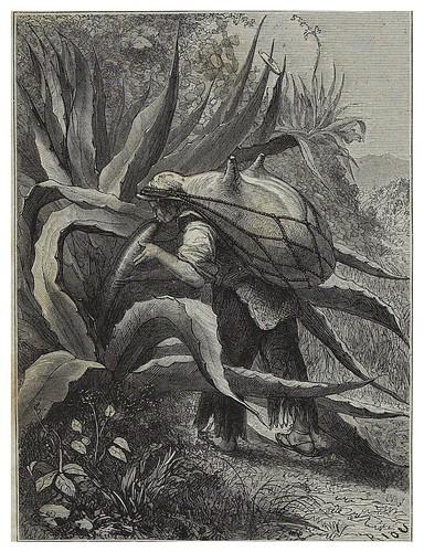 009-Indio extrayendo el pulque de un Agave-Les Anciennes Villes du nouveau monde-1885- Désiré Charnay