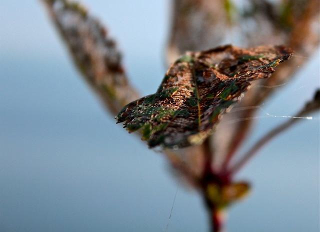 Dead Leaf