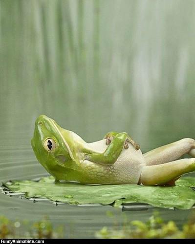 Frog_Relaxing