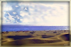 Dunas  de Maspalomas - Gran Canaria -  Explore (Arice39) Tags: ocean vacation texture tourism beach beautiful fauna composition canon de islands golden photo interesting agua nikon marine different peace sandy paloma playa aves colores arena explore oasis bella siempre isla vacaciones interesante belleza archipelago dunas turistas fotografa maspalomas deser resplandor turstica dunas arice39 maspalomas paisajes