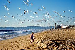 Flight (jakerome) Tags: california seagulls mountains beach birds losangeles cool day flight clear pacificocean lacey uncool powerplant manhattanbeach southbay sandbeach cool2 santamonicabay cool5 cool3 cool4 newprint smcpentaxda40mmf28limited uncool2 uncool3 uncool4 uncool5 uncool6 uncool7 wpwide mbportfolio