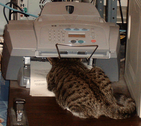 Cat in a Printer