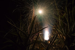 Smoky Sparkles (AZAdam) Tags: fire smoke firework incendiary spark