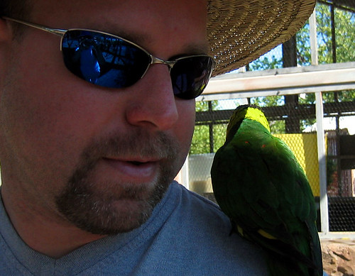 Jeff-and-the-needy-lorikeet