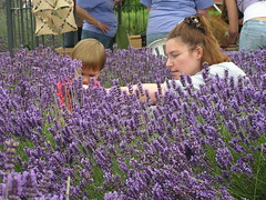 Torrey and Alicia picking Lavender (whitingjon) Tags: alicia lavender sequim torrey