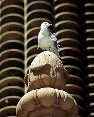 """Chicago - Marina City """"Lookout Bird"""" (David Paul Ohmer) Tags: pictures travel chicago bird tourism photography illinois nikon waterfront photos pics cities adventure riverfront chicagoriver nikkor n90 riverwalk marinacity cookcounty chicagoland 28200mm travelphotography cityphotography"""