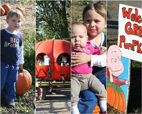 the great pumpkin hunt at Butlers Orchard