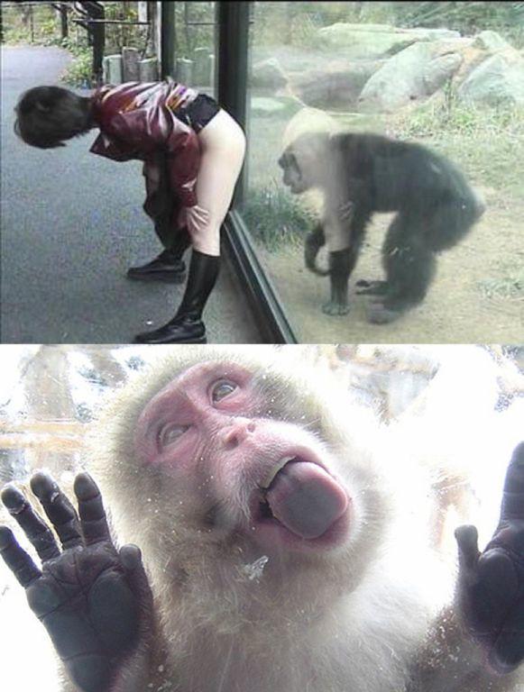 猴子是從猿猴進化而來的證明