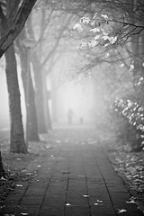 Someone in the Fog *Explore* (generalstussner) Tags: bw white mist black leaves silhouette fog canon dof nebel foggy sw f2 schwarz 135mm weis 5dmarkii