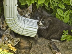 Spring Kittens (Sunset Sailor) Tags: cat spring kittens litter abigfave anawesomeshot impressedbeauty isawyoufirst