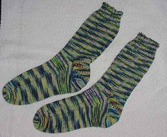 Seal Rock Socks