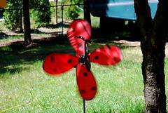 blur (Mel Something) Tags: garden ladybug pinwheel penticton