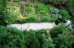 aerial garden view july 17 2007