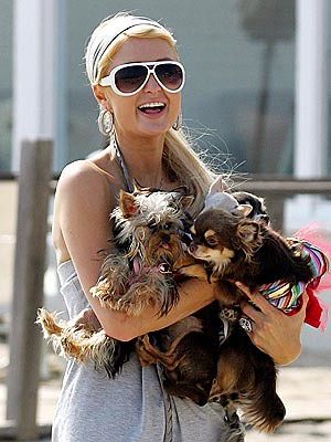 Paris Hilton takes her ever-expanding puppy pack for a walk along the Malibu beach on Tuesday by Paris hilton the biggest celebrity