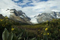 Wilcox Pass (N_!_C_K) Tags: hiking pass glacier parkway wilcox icefields athabasca specnature