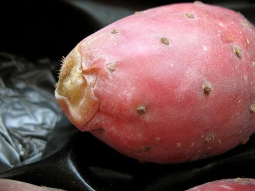 Prickly Cactus Pear