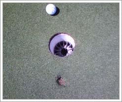 josh's golf inch