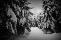 out of the woods (H o g n e) Tags: winter bw white snow norway forest landscape blackwhite woods frost january explore orton claustrophobic vestfold norwegianwood norwegianforest explored winterforest bildekritikk