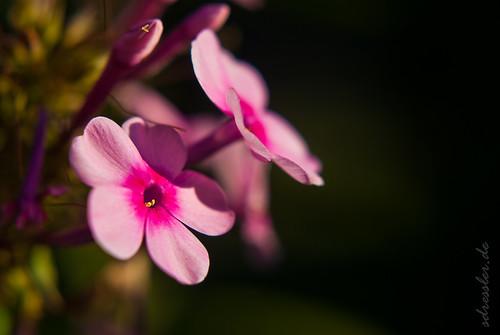 flower forever