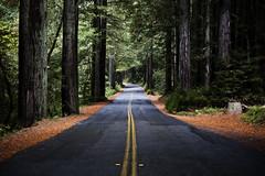 deepwoods (eb78) Tags: woods forest redwoods highway road bayarea california ca marin northbay samuelptaylorstatepark