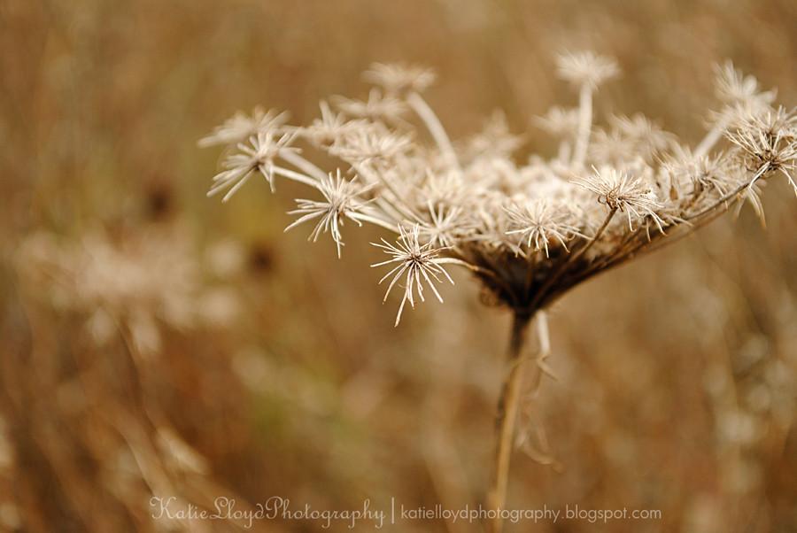 Weeds-wm