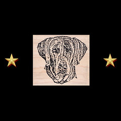 Weimaraner Rubber Stamp (RubberShow) Tags: dog pet black cute animal scrapbooking paper puppy sweet craft ears rubber stamp weimaraner etsy rubberstamp rubberstamping craftsupplies papercrafts craftstamps