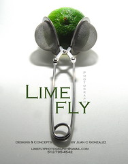 Lime Fly Photography