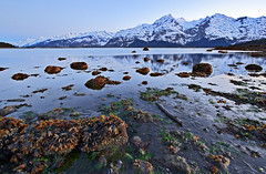 Low Tide (eyebex) Tags: ocean sunset sea snow mountains seaweed delete10 weed dusk tide low save8 canonefs1022mmf3545usm