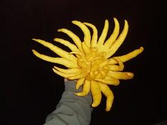 Bhuddas Hand Citron
