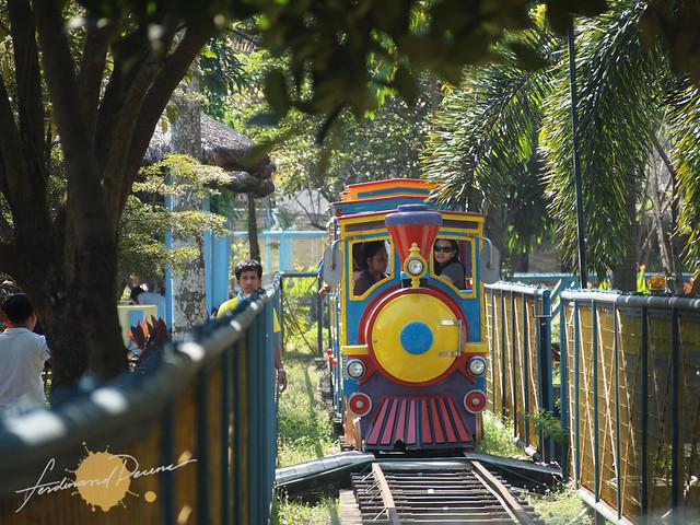 Rainforest Train
