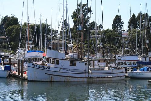 ocean santacruz docks boats harbor ships