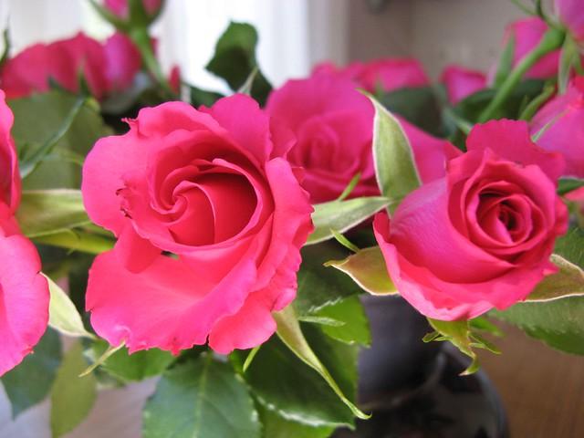 New roses neurosis