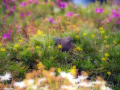 Find The Birdie! - by kudaker