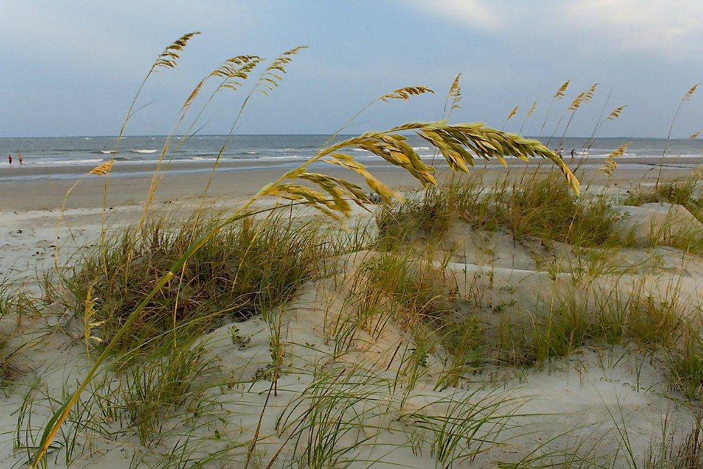 sea oats ©2007 RosebudPenfold