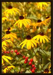 Bright Summer Garden - by wishymom (Stephanie Wallace Photography)